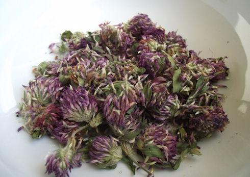 red clover amelias organics